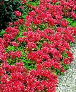 flowers432